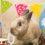 シャルルくん6歳の誕生日