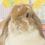 ペロペロキャンディちゃん 4歳の誕生日