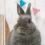 サマーちゃん3歳の誕生日