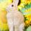 マーマレードちゃん4歳のお誕生日