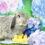 マカロニちゃん6歳のお誕生日イベント