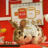 うさぎカフェ うさぎ専門店 グルーミングフォト